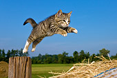 CAT 03 KH0373 01