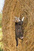 CAT 03 KH0374 01