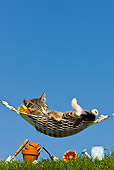 CAT 03 KH0379 01