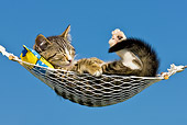 CAT 03 KH0380 01
