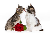 CAT 03 KH0384 01