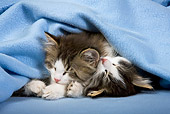 CAT 03 KH0385 01