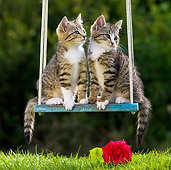 CAT 03 KH0394 01