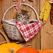 CAT 03 KH0400 01