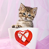 CAT 03 KH0403 01