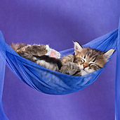 CAT 03 KH0406 01