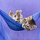 CAT 03 KH0407 01