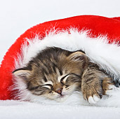 CAT 03 KH0408 01