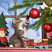 CAT 03 KH0414 01
