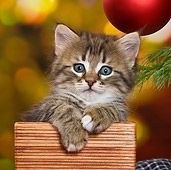 CAT 03 KH0417 01