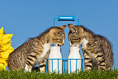 CAT 03 KH0421 01