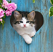 CAT 03 KH0422 01