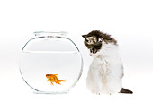 CAT 03 KH0425 01