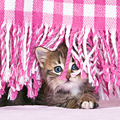 CAT 03 KH0427 01