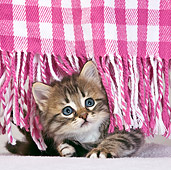 CAT 03 KH0428 01
