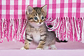 CAT 03 KH0430 01