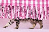 CAT 03 KH0431 01