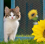 CAT 03 KH0434 01