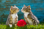 CAT 03 KH0446 01