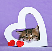 CAT 03 KH0447 01