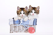 CAT 03 KH0449 01
