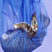 CAT 03 KH0459 01