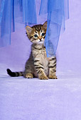 CAT 03 KH0461 01
