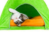 CAT 03 KH0465 01