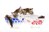 CAT 03 KH0468 01
