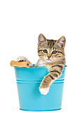 CAT 03 KH0470 01