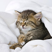 CAT 03 KH0475 01