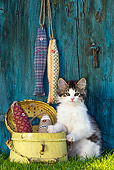 CAT 03 KH0477 01