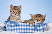 CAT 03 KH0483 01