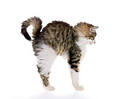 CAT 03 KH0492 01