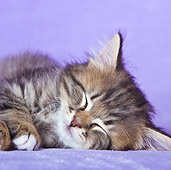CAT 03 KH0495 01