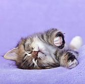 CAT 03 KH0498 01