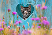 CAT 03 KH0502 01