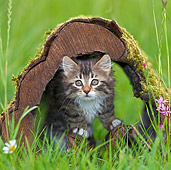 CAT 03 KH0507 01