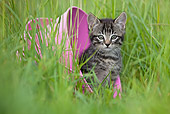 CAT 03 KH0508 01