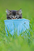 CAT 03 KH0510 01