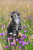 CAT 03 KH0512 01