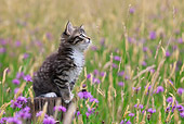 CAT 03 KH0513 01