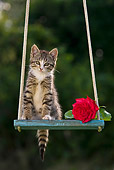 CAT 03 KH0515 01