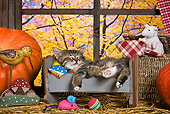 CAT 03 KH0516 01