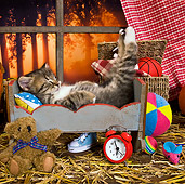 CAT 03 KH0517 01