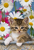CAT 03 KH0519 01