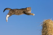 CAT 03 KH0521 01