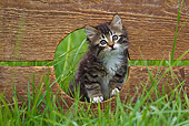 CAT 03 KH0526 01