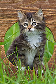 CAT 03 KH0527 01