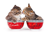 CAT 03 KH0533 01